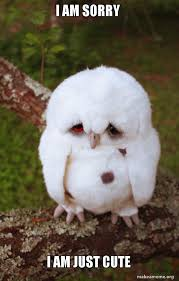 I Am Sorry Meme - i am sorry i am just cute sad owl make a meme
