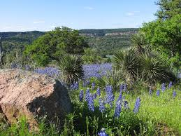 Map Of Texas Hill Country Texas Hill Country Texas Wildflowers 2007 Sean Malloy Flickr