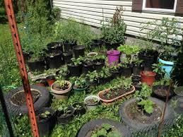 building a craigslist garden transitional traditions blog grit
