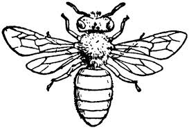 male honey bee coloring pages coloring sky