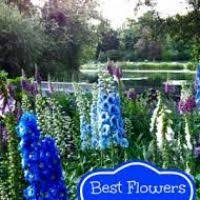 best flowers for cutting flowers ideas for review