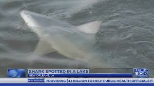 Louisiana lakes images Shark spotted in lake in louisiana jpg