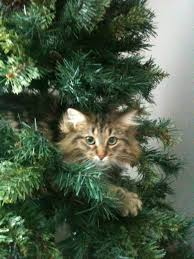 Cat Climbing Christmas Tree Video My Mom Sent Me Photos Of Her New Christmas Tree That Cat Seems To