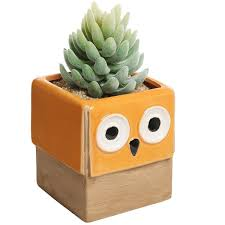 Ceramic Succulent Planter by Novelty Orange Owl Face Design Ceramic Succulent Planter Plant
