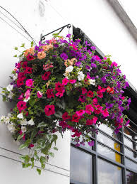granny gaules garden summer hanging baskets