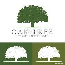 oak tree logo design template v 7 stock image and royalty free