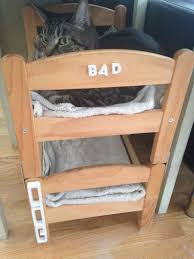 Ikea Bunk Beds Can A Dog And A Cat Be Bunk Bed Mates Seems So Ikea Hackers