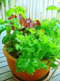 25 trending indoor vegetable gardening ideas on pinterest