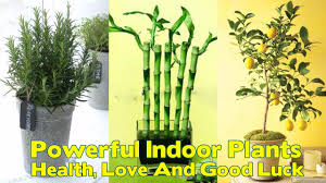 12 powerful indoor plants that are known to bring you good health