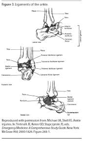 Collateral Ligaments Ankle Ligaments Of The Ankle Emergency Medicine Practice 1 Jpg
