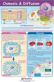 97 best cells cell membrane images on pinterest cell membrane