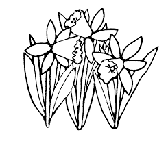 daffodil outline free download clip art free clip art on