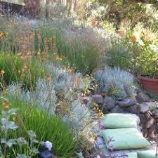 summers end in new england great choices of shrubs and grasses