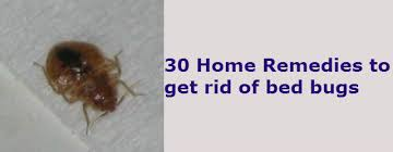 Powder That Kills Bed Bugs 30 Home Remedies To Get Rid Of Bed Bugs From Your House