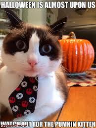 Meme Halloween - 16 funny halloween memes funny halloween memes funny halloween