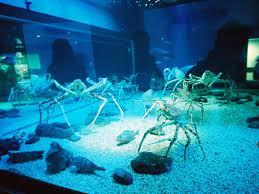 japanese aquarium osaka aquarium kaiyukan supermerlion