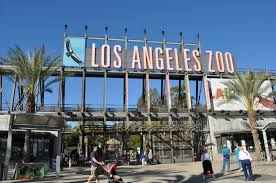 restaurants open on thanksgiving in los angeles an insider u0027s guide to the los angeles zoo