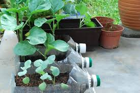 how to plant a container garden vegetables the garden inspirations