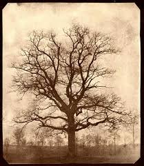 oak tree shared by jess on we it