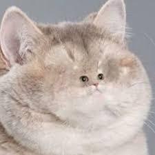 Cat Heavy Breathing Meme - 24 best heavy breathing images on pinterest funny images funny