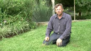 killing and keeping weeds out of your lawn youtube