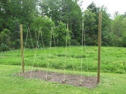 What Vegetables Need A Trellis Best 25 Hops Trellis Ideas On Pinterest Hops Plant Vine Fence