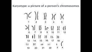 mendelian genetics lessons tes teach