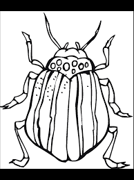 fresh bug coloring pages 50 89