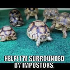 Turtle Meme - memes