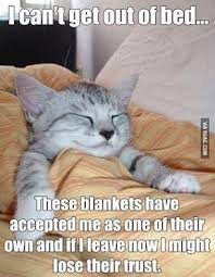 Stay In Bed Meme - i can t get out of bed funny memes animals cats dog meme lol