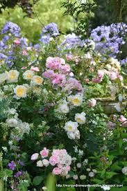 cottage garden flowers 1043 best garden images on pinterest beautiful gardens cottage