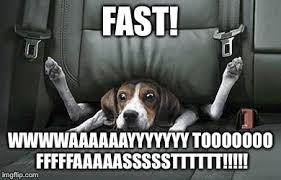 Dog In Car Meme - image tagged in car seat dog imgflip