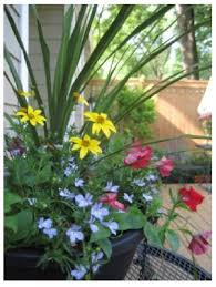 Potted Plants For Patio Potted Plants For The Patio Enough To Weather A Storm
