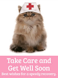 cat get well card if you someone who is feeling