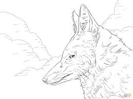 ethiopian wolf head coloring page free printable coloring pages