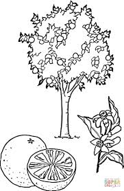 orange tree coloring page free printable coloring pages lemon tree