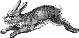 vintage rabbit search photos by unorobus