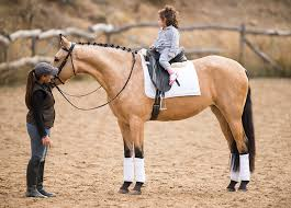 pura sale horses for sale and export world wide horses for sale