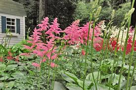12 Best Annual Flowers For by Shady Yard These Colorful Plants Pack Curb Appeal