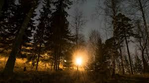 forests november 2017 browse articles what finland doesn t want you to about its forests euractiv com