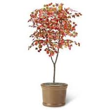 artificial maple tree trunk maple tree for
