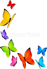 color butterflies for your design stock vector colourbox