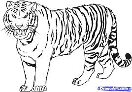 draw a tiger by drawing sheets added by january