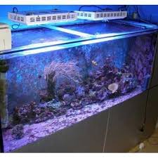 best lighting for corals 22 best led aquarium lights images on pinterest aquarium led