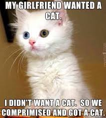 Cute Cats Memes - 99 of the funniest pinterest pictures we ve ever seen humor funny