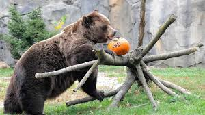 zoo animals celebrate halloween abc7ny com