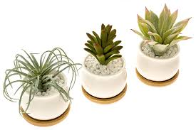 amazon com stylish ceramic succulent planters by ecoplant