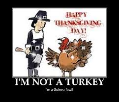 Happy Thanksgiving Funny Images Swinespi Funny Pictures Funny Thanksgiving Pictures Happy