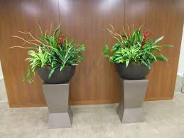 plants for the house interior plants officialkod com