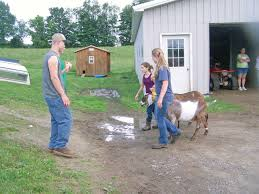 erie county 4 h goat meeting